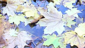 Autumn yellow leaves in puddle shining on sun, sunrays sunlights foliage background, sunbeams and autumn and steady and. Autumn yellow leaves in puddle shining stock video footage