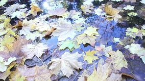 Autumn yellow leaves in puddle shining on sun, sunrays sunlights foliage background, sunbeams and autumn and steady and. Autumn yellow leaves in puddle shining stock footage