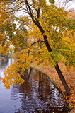 Autumn yellow leaves stock photography