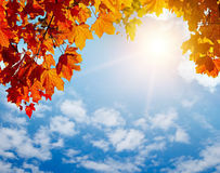 Autumn yellow leaves in sun rays. And blue sky Stock Photos