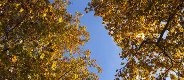 Autumn yellow Stock Images