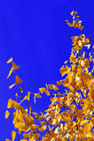 Autumn yellow leaves under a sunny blue sky. Stock Images