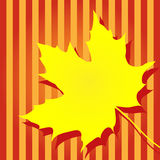 Autumn yellow maple leaf Royalty Free Stock Photos