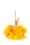 Autumn yellow maple leaf on white background. Stock Photography
