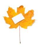 Autumn yellow maple-leaf with white empty price card Stock Photo