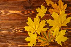 Autumn yellow maple leaves against the background of an old wooden table. Royalty Free Stock Photos