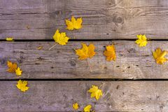 Autumn yellow maple leaves lie on the old unpainted wooden floor. Autumn mood royalty free stock images