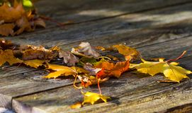 Autumn yellow maple leaves lie on a wooden table Stock Photos