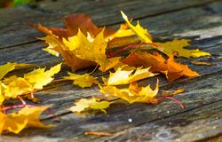 Autumn yellow maple leaves lie on a wooden table Royalty Free Stock Photos
