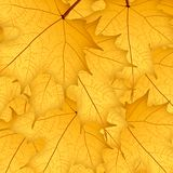Autumn yellow maple leaves on yellow background. Illustration. Background royalty free illustration