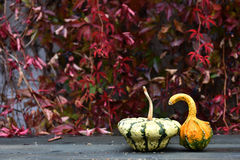 Autumn yellow pumpkin on a wooden table Stock Images