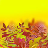 Autumn. Yellow and red leaf Stock Photography