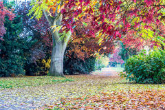 Autumn yellow and red leaf trees in a park in England Royalty Free Stock Image