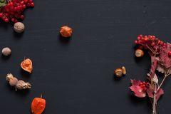 Autumn yellow and Red leaves of fruit nuts meal. Autumn yellow and Red leaves of fruit nuts stock photo