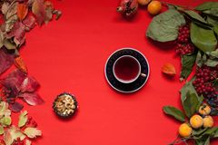 Autumn yellow and Red leaves of fruit nuts meal. Autumn yellow and Red leaves of fruit nuts royalty free stock images