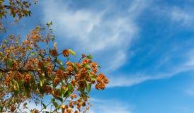 Autumn yellow tree. Sanctuary of Mentorella, Lazio, Italy. Stock Images
