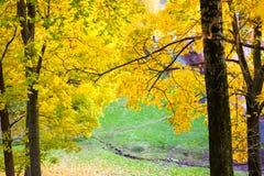 Autumn yellow trees royalty free stock photos
