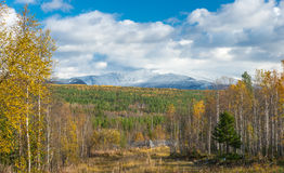 Autumn, yellow trees. The mountains in the snow. Stock Image