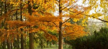 Autumn yellow trees. Sunny autumn day Stock Image