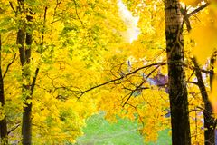 Autumn yellow trees in Tsaritsyno park stock photos