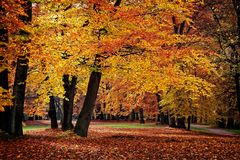 Autumn Yellow Trees in un parco fotografie stock