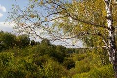 Autumn yellowed Stock Photo