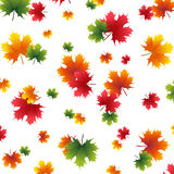 Autumn yellowed maple leaf on a white background Royalty Free Stock Photography