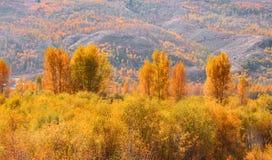 Autumn in Yellowstone Royalty Free Stock Photo