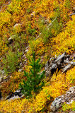 Autumn in Yellowstone National Park Stock Photography