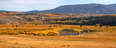 Autumn in Yellowstone Stock Photo