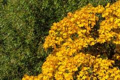 Autumn Yin och Yang royaltyfria bilder