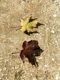 Autumn Yin y Yang Foto de archivo libre de regalías