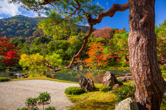 Autumn at zen garden in Arashiyama, Japan. Autumn at zen garden of the tenryu-ji temple in Arashiyama, Japan Royalty Free Stock Photos