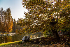 Autumn in Zhongshan Park, Qingdao, China Royalty Free Stock Photography