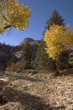 Autumn in Zion Stock Photo