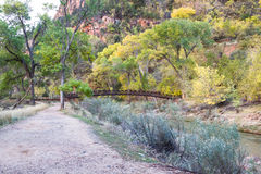 Autumn in Zion NP Stock Image