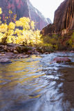 Autumn in Zion NP Stock Images