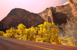 Autumn in Zion Stock Images
