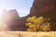 Autumn in Zion Royalty Free Stock Photos