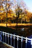 Autumn2 dourado Imagens de Stock Royalty Free