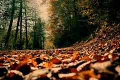 Autumn3 Fotografia Stock