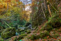 Autumna landscape with canyon and river. Landscape with a beautiful canyon in the fall Royalty Free Stock Photography
