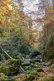 Autumna landscape with canyon and river. Landscape with a beautiful canyon in the fall Stock Image