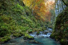 Autumna landscape with canyon and river. Landscape with a beautiful canyon in the fall Stock Images