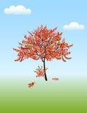 Autumnacacia Image libre de droits