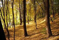 Autumnal royalty free stock photo