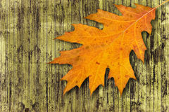 Autumnal abstract background Royalty Free Stock Images