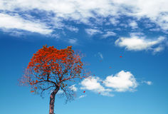 Autumnal abstract background with red small tree Stock Image