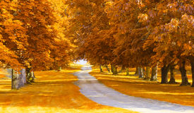 Autumnal alley. Perfect fall background Royalty Free Stock Image