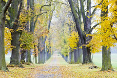 Autumnal alley. Path in empty autumnal alley Royalty Free Stock Images